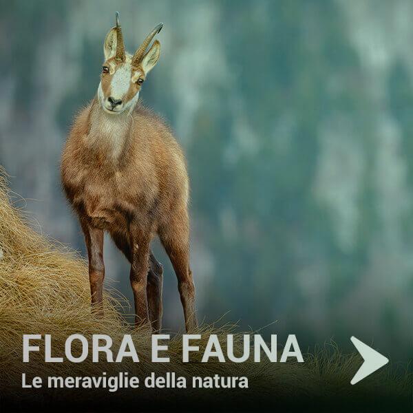 flora-e-fauna11