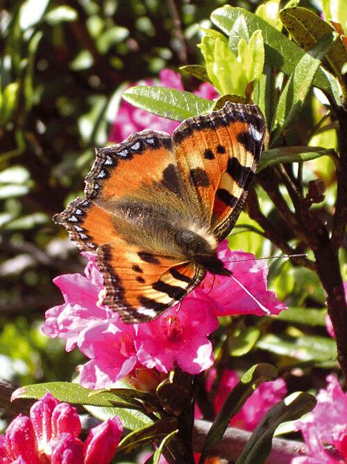 flore-e-fauna2