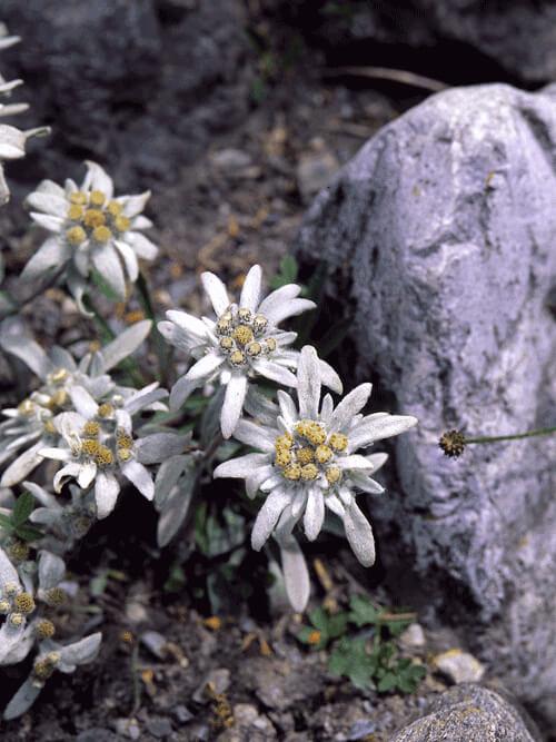 flore-e-fauna3