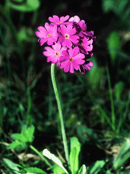 flore-e-fauna5