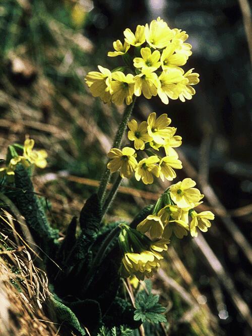 flore-e-fauna7